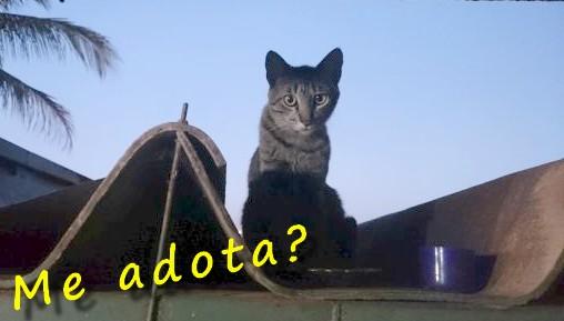 GatoTigradoTelhado.jpg